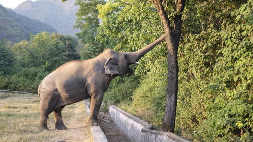 Por favor, saquen al elefante de ahí