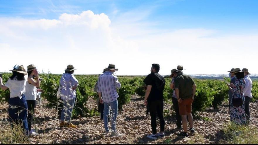 La Ruta del Vino de Toro recibió cerca de 19.000 visitantes el pasado año