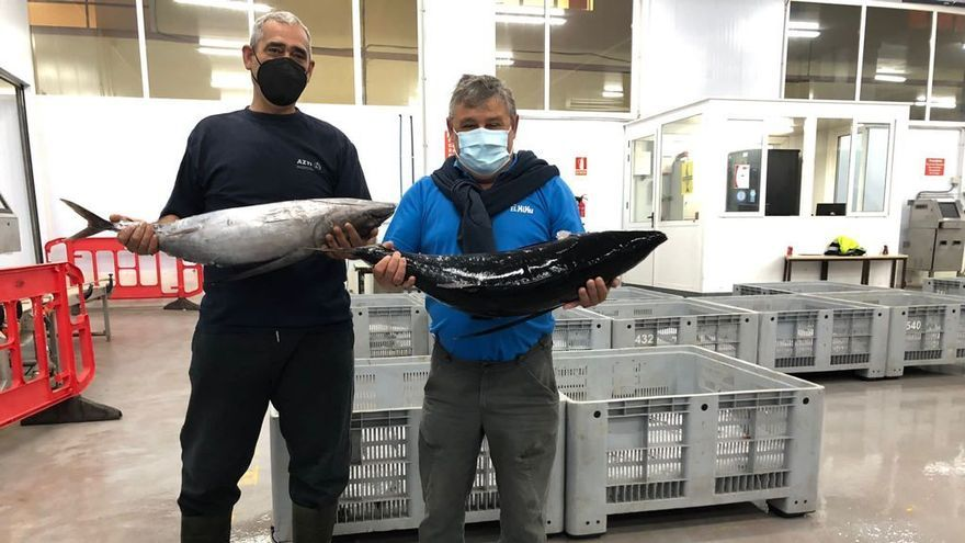 Arranca la temporada del bonito en la lonja de Gijón con la subasta de 3.300 kilos