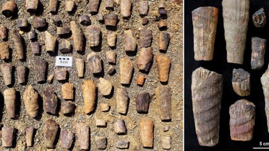 Descubren en Cabañeros un raro fósil marino
