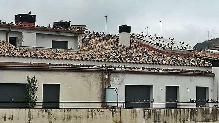 Un grup de coloms en un edifici buit de Solsona crea malestar entre els veïns