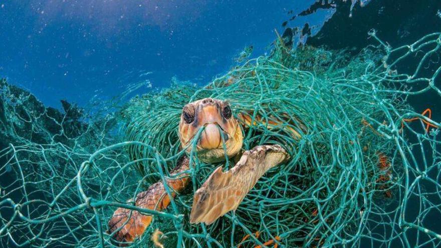 Redes asesinas: una muerte lenta y dolorosa por aparejos de pesca abandonados