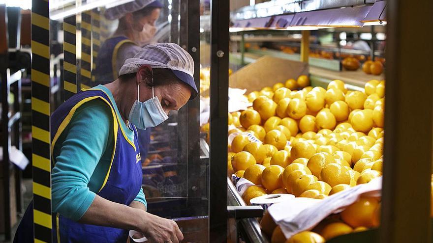 La pandemia eleva un 11 % el negocio citrícola exterior de la  C. Valenciana