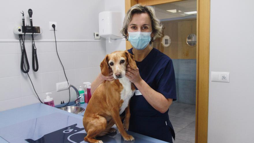 """Elena Diéguez: """"El perro que muerda o coma carne de jabalí contagiado con la Enfermedad de Aujeszky morirá, no hay cura"""""""