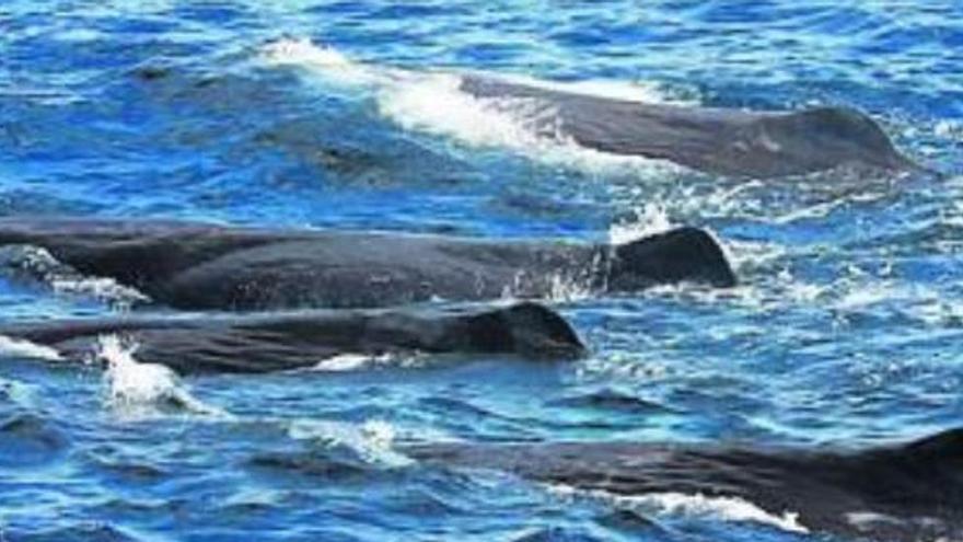 Un estudio sobre la biodiversidad marina en el este de Canarias identifica cerca de 2.000 especies