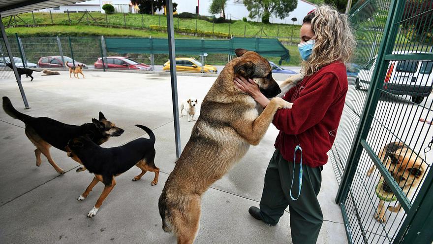La pandemia canina: crecen los abandonos