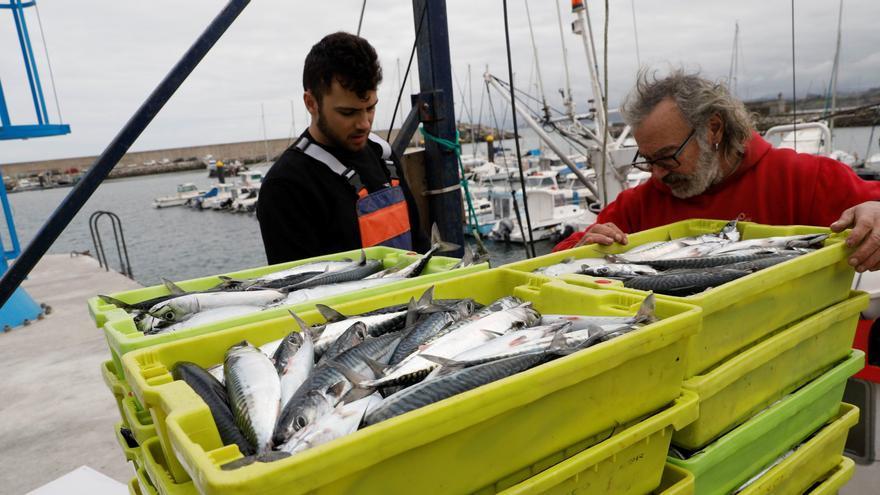 La secretaria general de Pesca anuncia una mayor vigilancia de la pesquería de xarda
