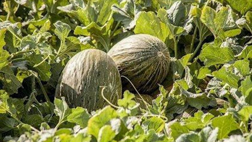 Carrefour vende melones de Brasil como si fueran españoles