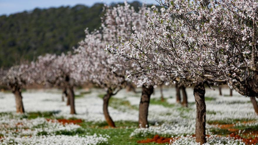 La primavera será más cálida y seca de lo normal en Ibiza