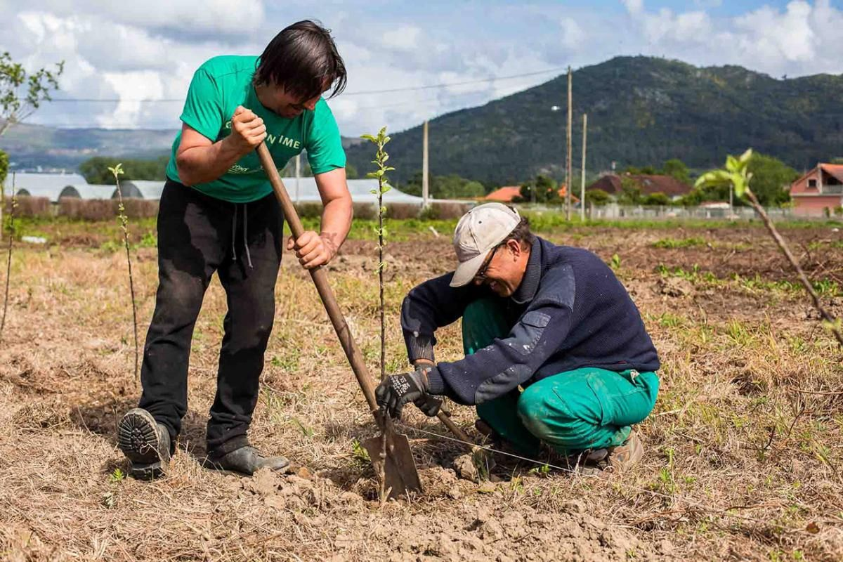 Plantación de aguacate en Tomiño