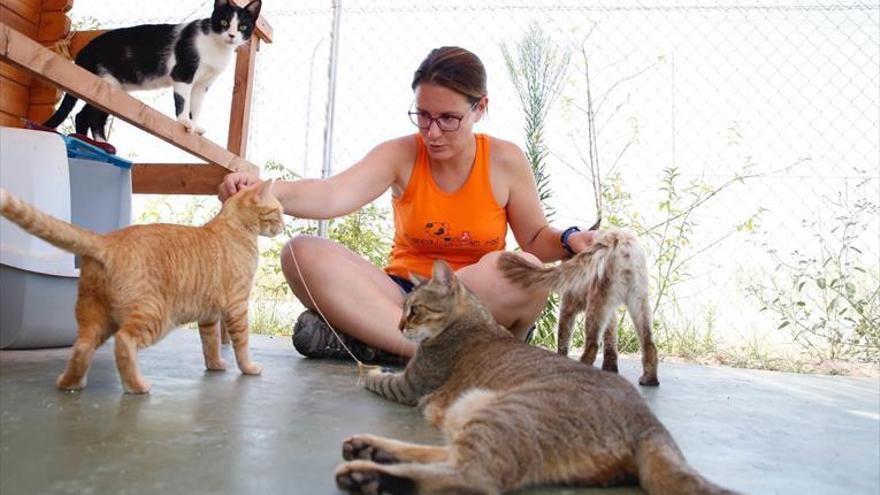 Al cuidado de los gatos