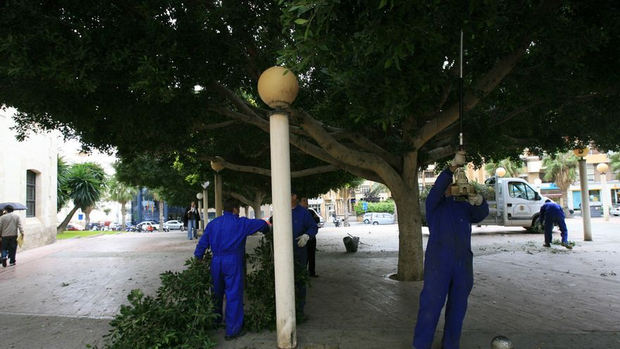 El Ayuntamiento pide a la Generalitat un mayor cuidado de los jardines de los Juzgados de Benalúa