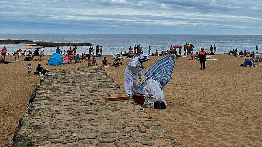 Retiran un enjambre de abejas en la playa de La Ñora, Villaviciosa