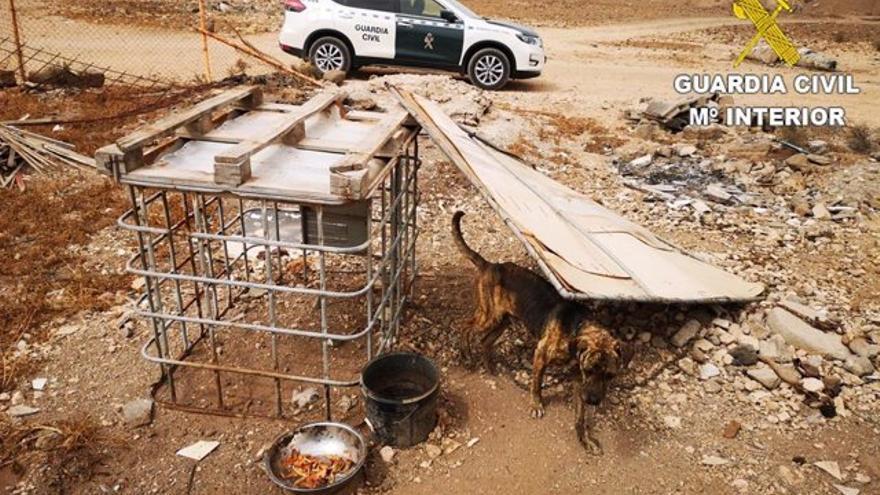 Detenido por alimentar a sus perros con alimentos podridos