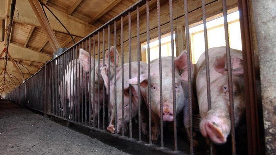 Bailo da el primer paso para evitar la construcción de una macrogranja de porcino