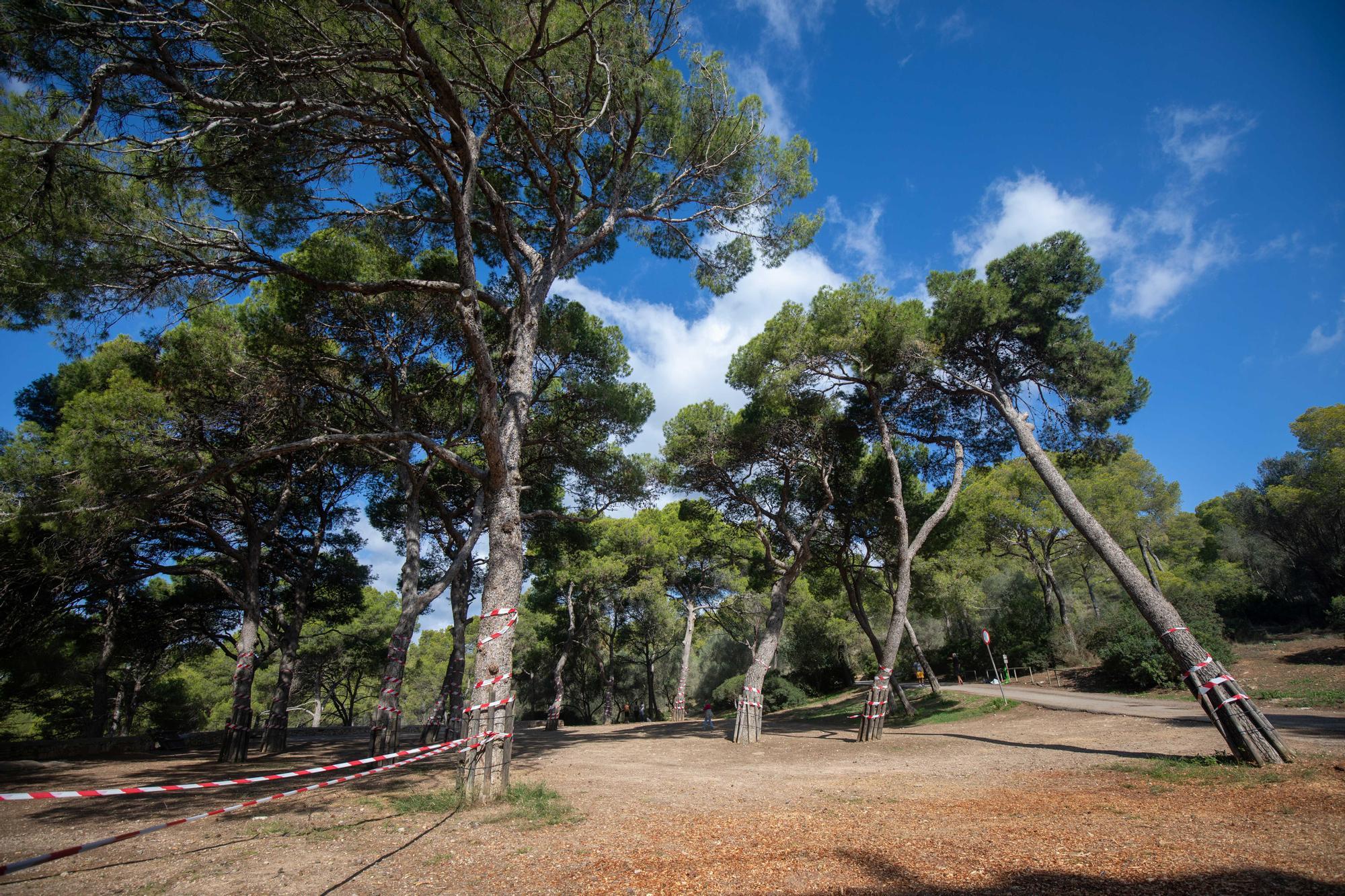 Palmario | Exigen parar el parque de ocio de Bellver
