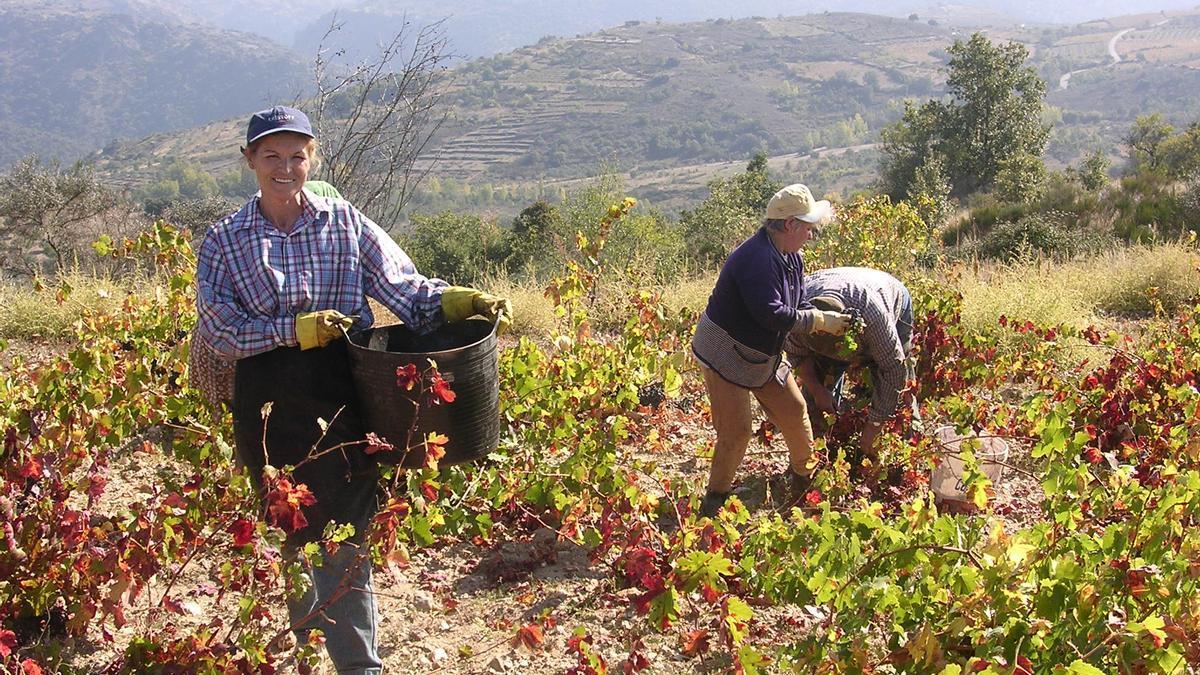 Recogida de uvas en un viñedo de la DO Arribes del Duero