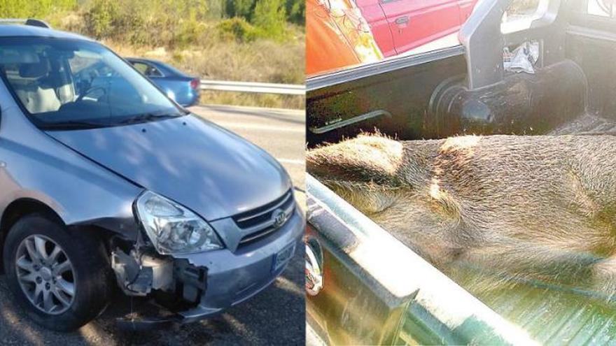 Los jabalís provocan 10 accidentes de tráfico en 4 días en Castelló