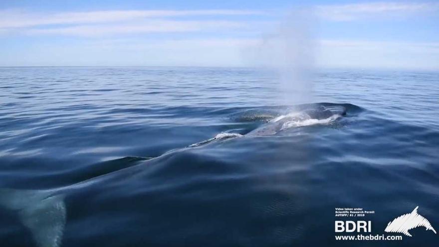 Nueve ballenas azules sorprenden a navegantes en la costa de las Rías Baixas