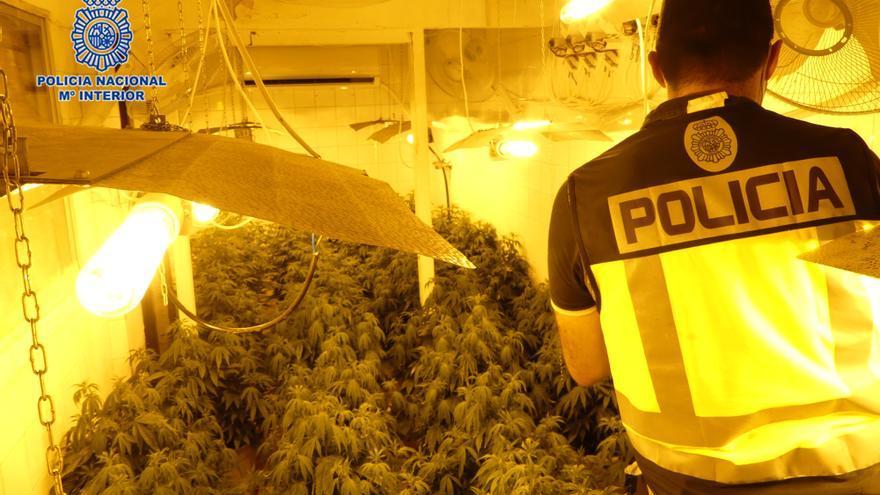 Desmantelan en Alcantarilla seis viviendas en las que se cultivaba marihuana