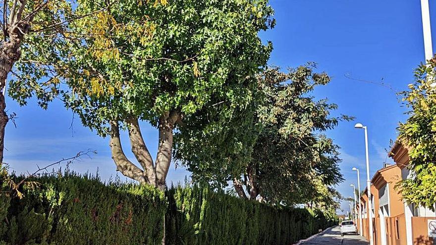 Vecinos de Corinto logran paralizan la tala de una veintena de árboles