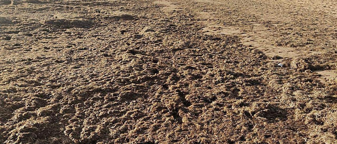 La posidonia muerta en la arena de la playa de Pau Pi.