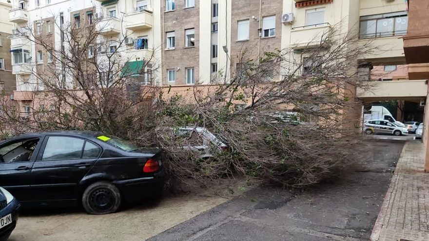 Se desploma un árbol de gran tamaño en el barrio de Ayora