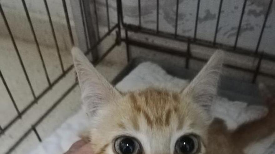 Rescatan en Vilaxoán a un gato atrapado en un pozo