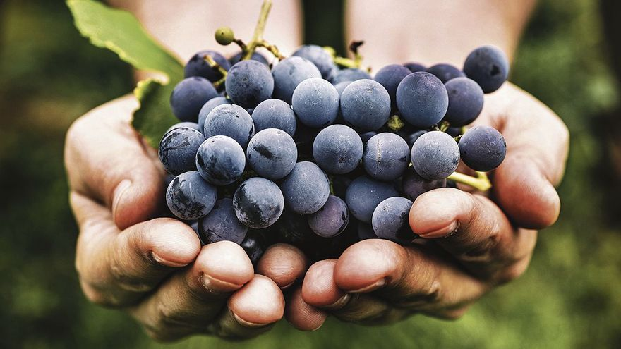 Terra Alta: passió pel vi