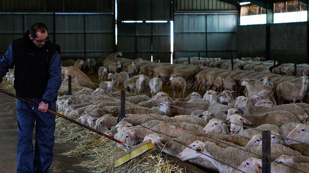 Un ganadero atiende una explotación de ovino en la provincia de Zamora. | Emilio Fraile
