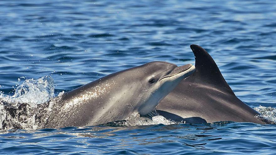 Los delfines, cada vez más tiempo al lado de mamá
