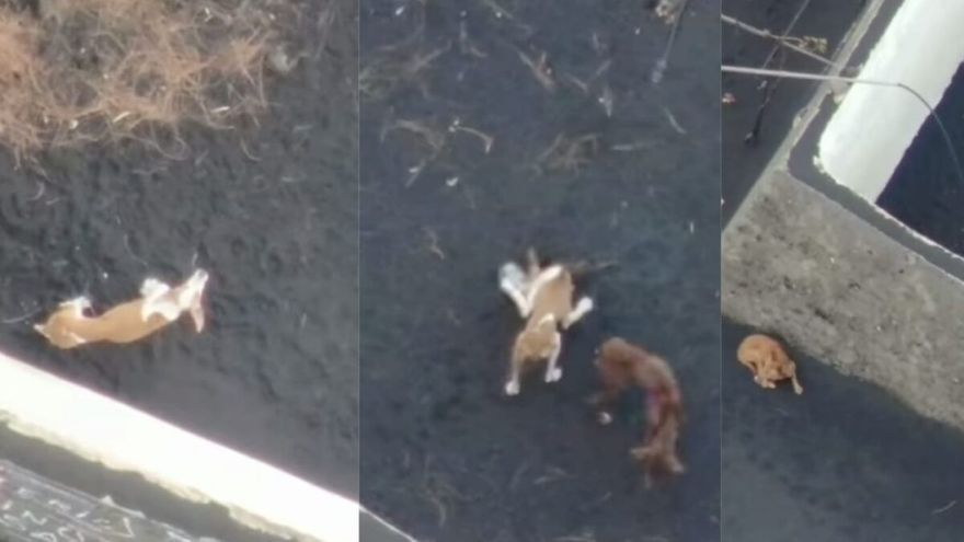 La Guardia Civil busca a los rescatadores de los perros de La Palma