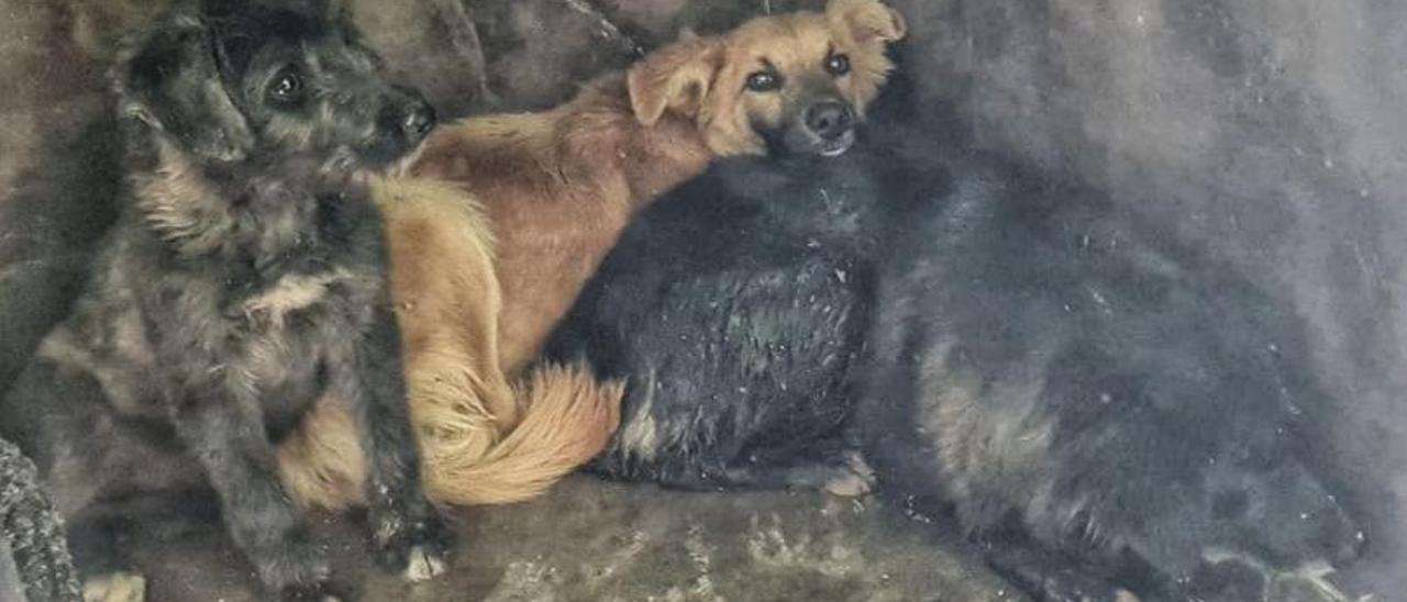 Tres perros rescatados. | INFORMACIÓN