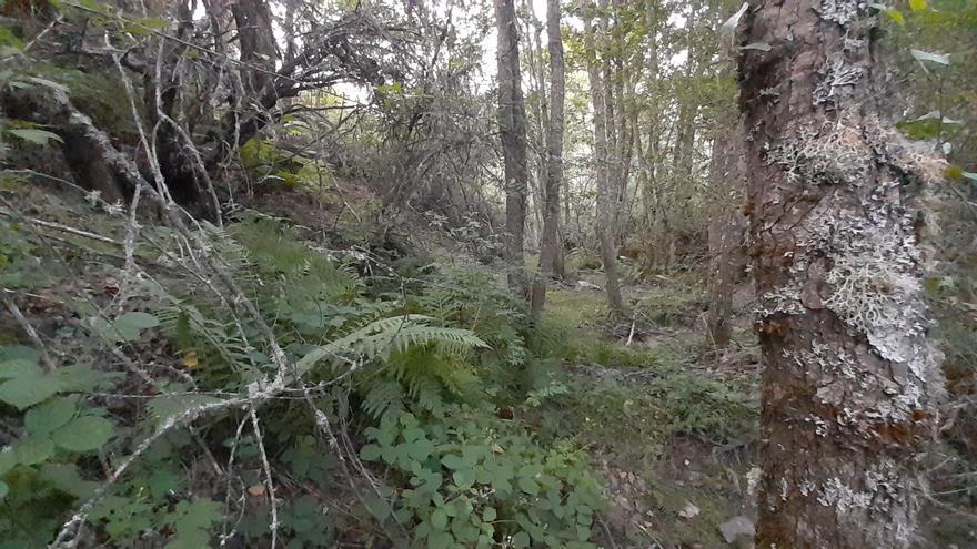 Vecinos de Manzanal de Arriba señalan el valor ecológico de los terrenos desafectados