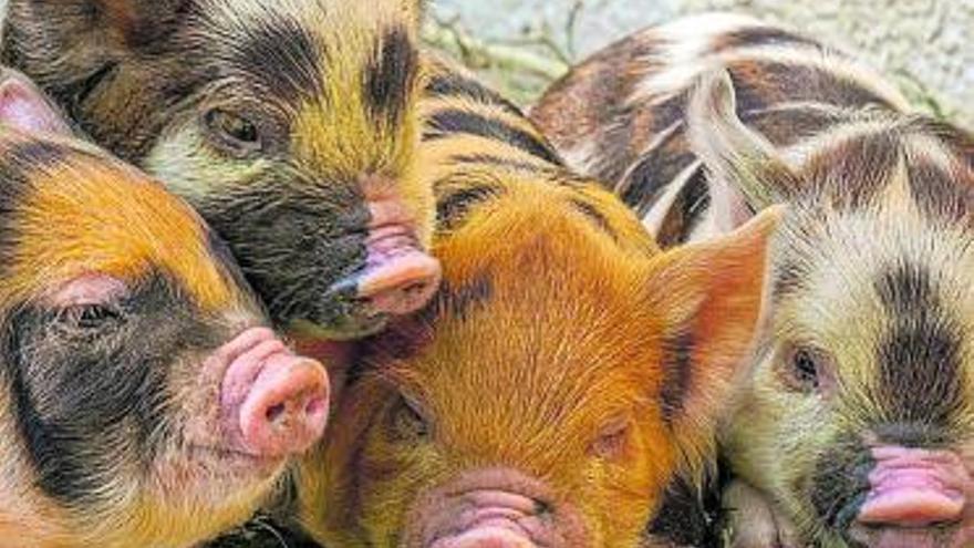 Sexo guarro, cochino, marrano y muy cerdo