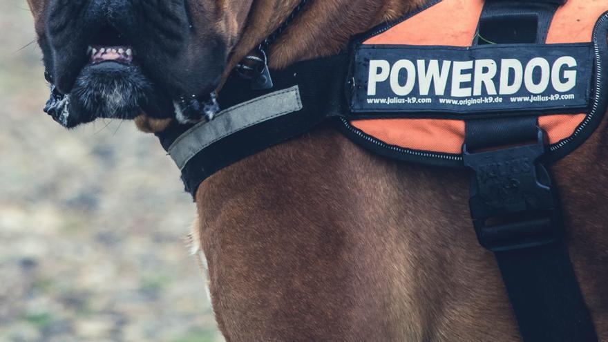 Una multa al dueño de un perro que atacó a una mujer en Zamora