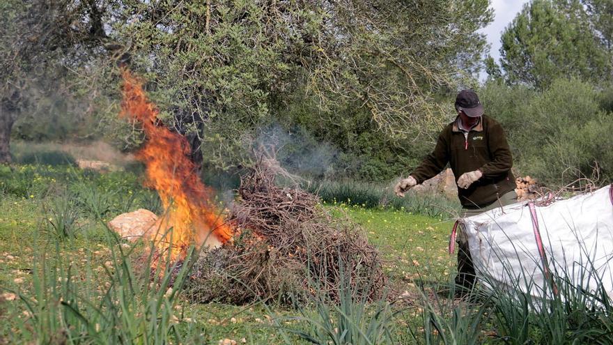 EU-Kommission nimmt Feuerbakterium auf Mallorca unter die Lupe