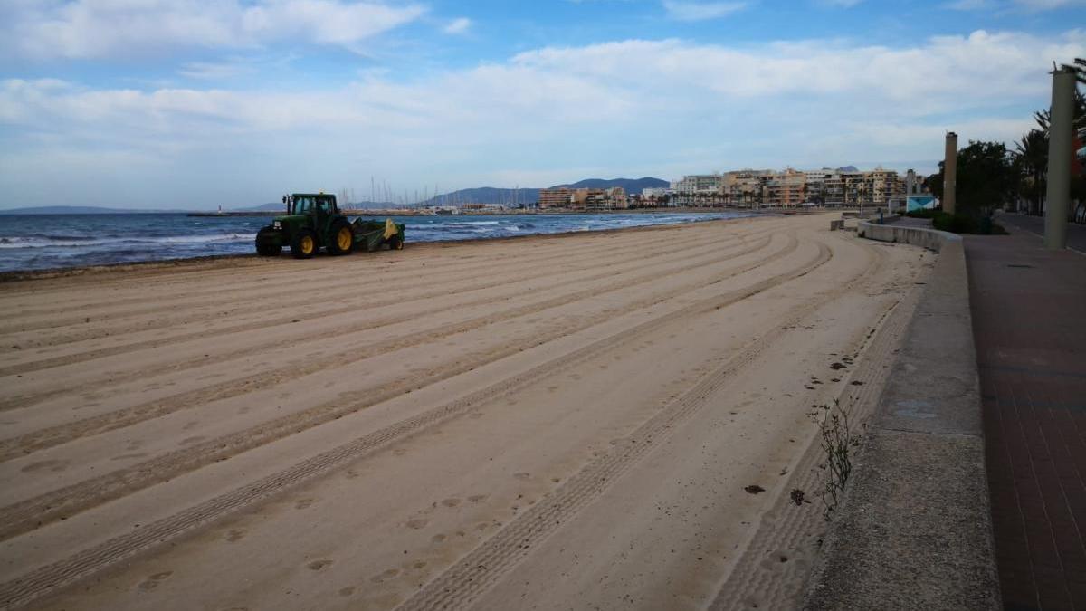 Limpieza de una playa de Palma.