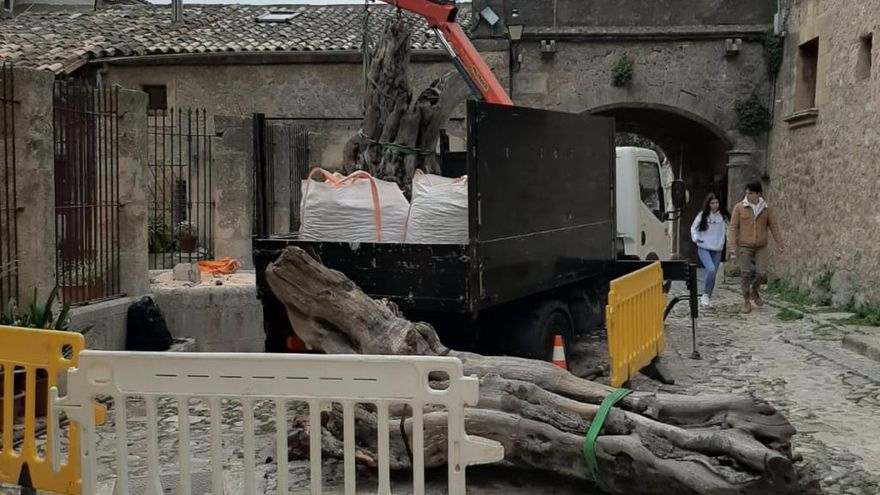 La productora de La Caza retira el algarrobo que situó sobre una fuente del XVII