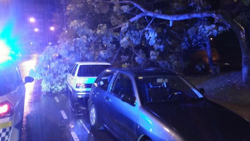 """""""Alex"""" ocasiona cortes de tráfico intermitentes en Llano Ponte y El Reblinco"""