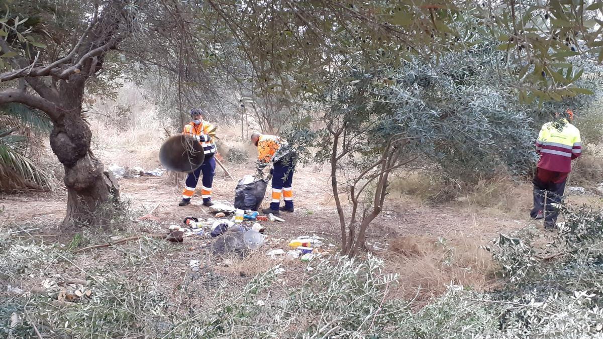 Tareas de limpieza en una zona forestal de Alicante