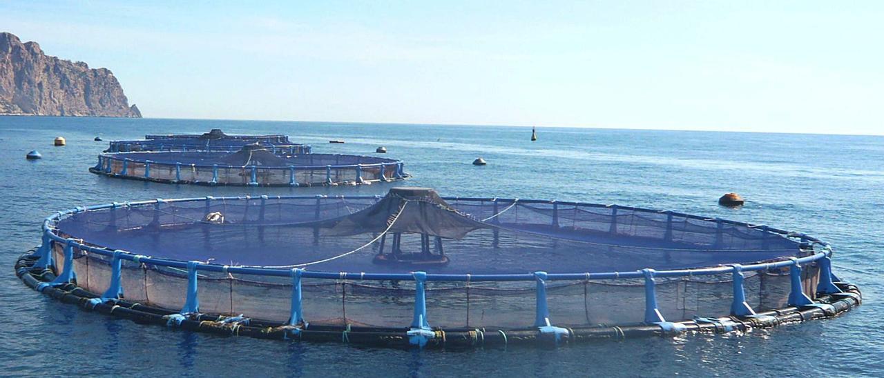 Una piscifactoría en Calp de la multinacional que va a instalar otra granja en El Campello. | INFORMACIÓN