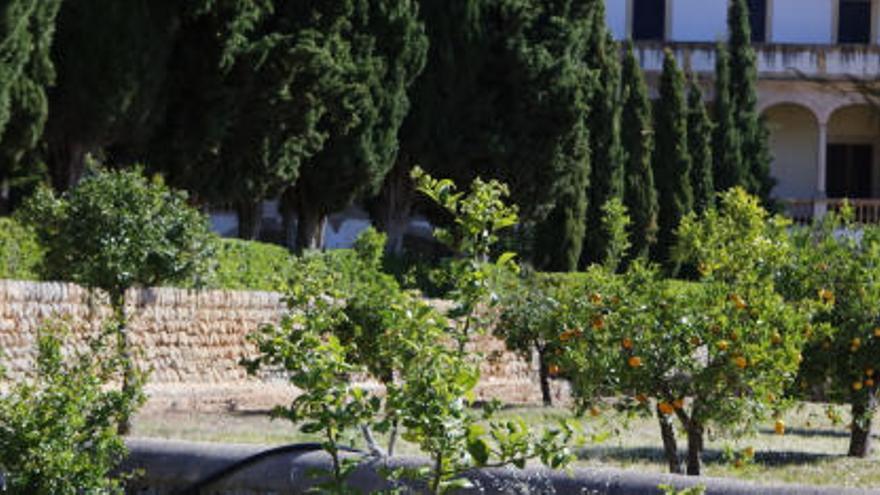 Hier wachsen die ältesten Mallorca-Orangen
