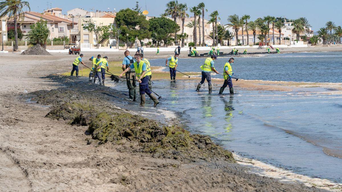 Se refuerza la limpieza de playas en el Mar Menor