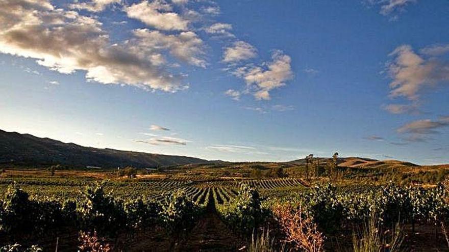 Terraselecta, la apuesta vinícola de Manuel Jove, exporta ya a 40 países