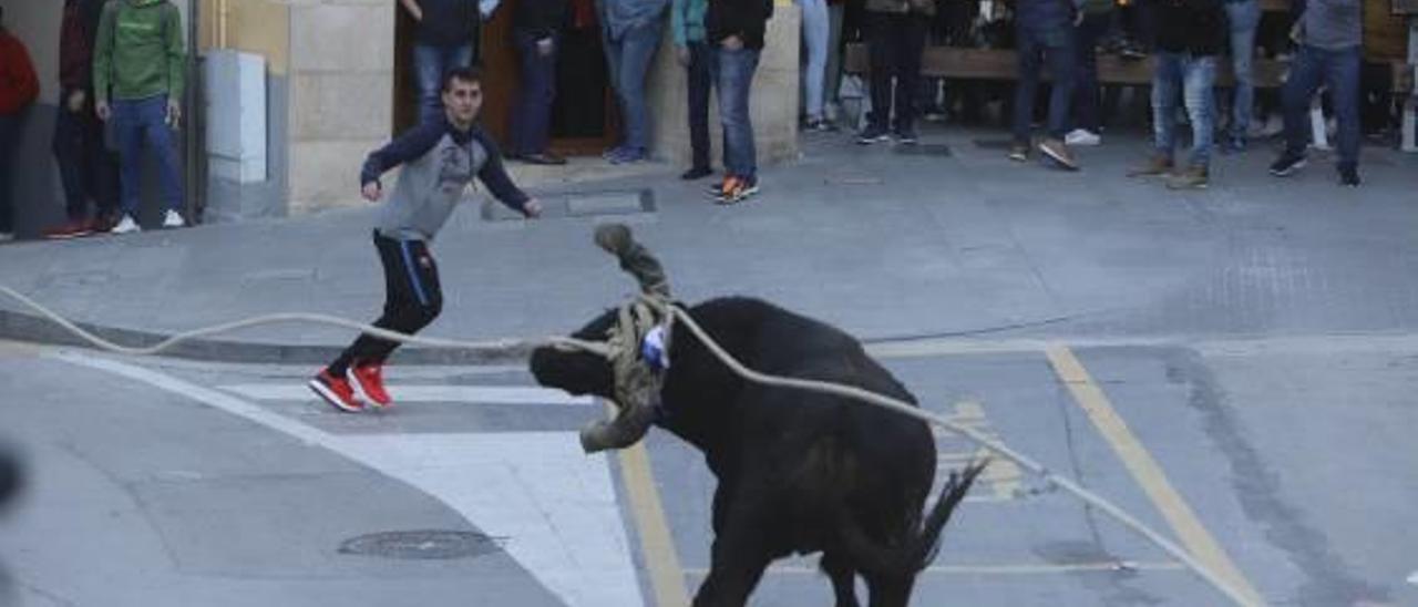 Cinco toros correrán por Ontinyent en la nueva cita con el Bou de les Penyes