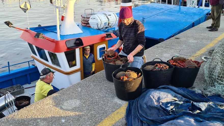 Subasta en la lonja: Asturias eleva el precio del centollo de O Grove hasta los 25 euros el kilo, su tope este año