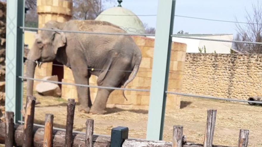 Comparte con nosotros tus fotos con la elefanta 'Flavia'