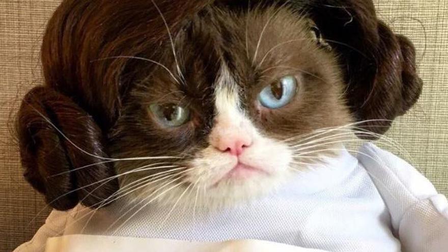 Mor Grumpy Cat, la famosa gata d'Internet