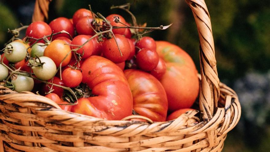 Els Magazinos de Dénia elige el mejor tomate de la Marina
